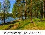 sunny summer morning outside... | Shutterstock . vector #1279201153
