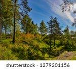 sunny summer morning outside... | Shutterstock . vector #1279201156