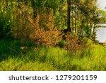sunny summer morning outside... | Shutterstock . vector #1279201159