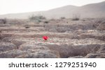 Solitary Red Flower In The...