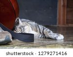 beautiful cat. cat with an... | Shutterstock . vector #1279271416