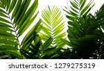 tropical palm leaves nature... | Shutterstock . vector #1279275319