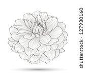 hand drawn flower dahlia.... | Shutterstock .eps vector #127930160