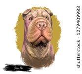 shar pei purebred type of dog... | Shutterstock . vector #1279409983