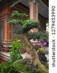 bonsai tree in a garden in bali ... | Shutterstock . vector #1279453990