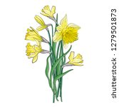 bouquet of yellow narcissus... | Shutterstock .eps vector #1279501873