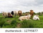 cattle on a river bank ... | Shutterstock . vector #12795877