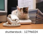 Stock photo cute kitten sleeps on the desktop 12796024