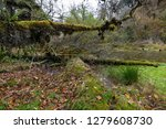 forest landscape of the... | Shutterstock . vector #1279608730