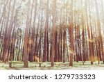 the colors of nature in autumn... | Shutterstock . vector #1279733323