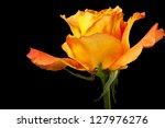 Rose Flower On A Black...
