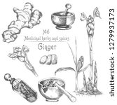 set hand drawn of ginger roots  ... | Shutterstock .eps vector #1279937173