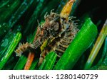 long snouted seahorse along... | Shutterstock . vector #1280140729