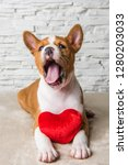 funny red basenji puppy dog... | Shutterstock . vector #1280203033