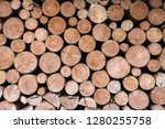 stacked tree trunks - stock photo