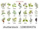 best anti fungal herbs set.... | Shutterstock .eps vector #1280304376
