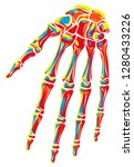 graphic colorful human skeleton ... | Shutterstock .eps vector #1280433226