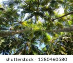 looking up at some beautiful... | Shutterstock . vector #1280460580