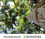 looking up at some beautiful... | Shutterstock . vector #1280460586