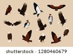 hawks and eagles birds with... | Shutterstock .eps vector #1280460679