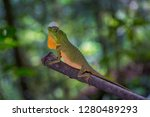 hump snout lizard or lyre head... | Shutterstock . vector #1280489293