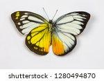 the orange gull butterfly ... | Shutterstock . vector #1280494870