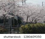 japanese spring poetry  cherry... | Shutterstock . vector #1280609350