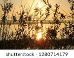 Wetland Shrub In Front Of...