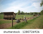 chicken coop in pasture on... | Shutterstock . vector #1280726926
