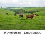 australian cattle farm with... | Shutterstock . vector #1280728000