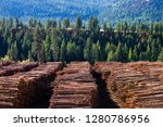 Wood timber logs in a pile at a ...