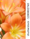 exotic flower close up   Shutterstock . vector #1280802760