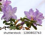 exotic flower close up   Shutterstock . vector #1280802763