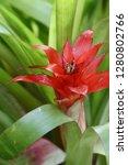 exotic flower close up   Shutterstock . vector #1280802766