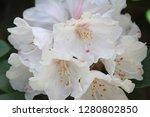 exotic flower close up   Shutterstock . vector #1280802850