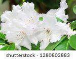 exotic flower close up   Shutterstock . vector #1280802883