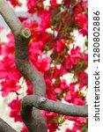 exotic flower close up   Shutterstock . vector #1280802886