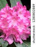 exotic flower close up   Shutterstock . vector #1280802889