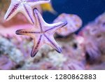 close up of the underside of a... | Shutterstock . vector #1280862883