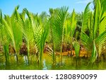 the juicy green young plants of ... | Shutterstock . vector #1280890099