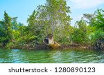 the old rotten tree trunk among ... | Shutterstock . vector #1280890123