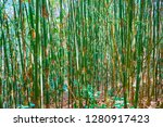 explore the tropical forest ... | Shutterstock . vector #1280917423