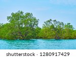 the daily trips to mangroves on ... | Shutterstock . vector #1280917429