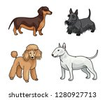 dogs of different breeds in... | Shutterstock .eps vector #1280927713