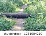 footpath in the forest. a tree... | Shutterstock . vector #1281004210