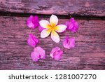 plumeria flowers and frangipani ... | Shutterstock . vector #1281007270