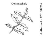 holly  ilex aquifolium  tree... | Shutterstock .eps vector #1281009916