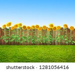 grass and sunflowers at... | Shutterstock . vector #1281056416