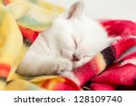 Stock photo newborn sleeping british baby kitten 128109740