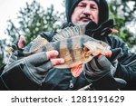 beautiful yellow perch in the... | Shutterstock . vector #1281191629